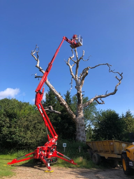 Tall Cherry Picker for tree work